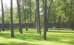 Wycięcie drzewa: wniosek o zezwolenie na wycinkę drzew