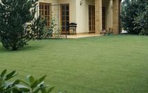 Trawnik z rolki - murawa w jeden dzień