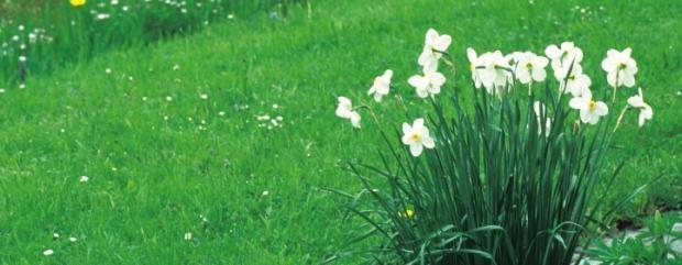 Kwiaty na trawniku